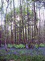King's Wood, above Godmersham Park.JPG