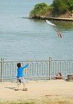 Kite flying 2.jpg