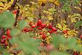 Korenskie rodniki in autumn 04.jpg