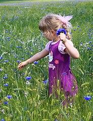 Kornblumen für die Mutter...Juni2011 380HWI2.jpg