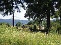 Kozlov - panoramio (17).jpg