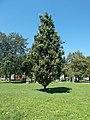 Krosno twin town memorial tree, Vizslapark, 2020 Zalaegerszeg.jpg