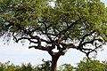 Kruger National Park, South Africa (8342070012).jpg