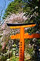 Kyoto, 桜, sakura, Otoyo-Shrine - panoramio.jpg