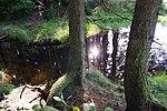 LSG GS 00059 Harz (LK Goslar) - am Weg am Neuen Grumbacher Teich (5).jpg
