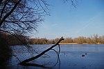 LSG H 00070 Calenberger Leinetal - Teich an der Calenburg (1).jpg