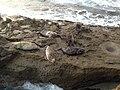 La Jolla Cove 12 2014-01-09.jpg