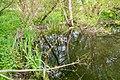 Lage - 2015-05-17 - LIP-084 Grutt- und Sunderbach (31).jpg