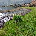 Lagoa das Sete Cidades, São Miguel, Açores - panoramio (1).jpg