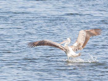 Landing on water.jpg