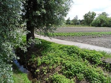 "Landschaftsschutzgebiet ""Gonsbachtal"", Mainz-Gonsenheim- Salat, und anderes Gemüse am Gonsbach.jpg"