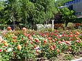 Lateral rosaleda del parque del Oeste.jpg