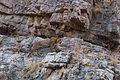Leopard Climbing.jpg