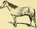 Les races chevalines - avec une étude spéciale sur les chevaux russes (1894) (14753443966).jpg