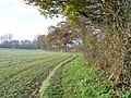 Letchmore Heath, The footpath to Patchetts Green - geograph.org.uk - 93977.jpg