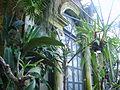 Leuven - Botanische tuin - broeikas 1.jpg