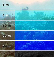 L'assorbimento della luce sott'acqua. L'intensità della luce decresce in modo logaritmico con il gradiente della profondità.