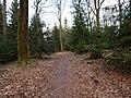 Limes-Path near Kieshübel 2.jpg