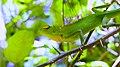 Lizard 525362.jpg