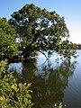 Loch McNess in Yanchep NP.jpg
