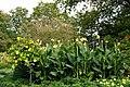 Longwood 2011 09 02 0512 (6160390983).jpg