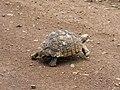 Look at this little fella go! (393192938).jpg