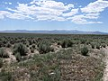 Looking West Southwest Across Sagebrush Toward Distant Desert Mountain Range - panoramio.jpg