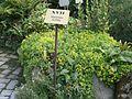 Lorto-botanico-di-padova-2016 28340423396 o 15.jpg