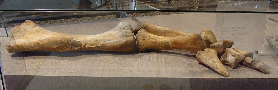 Lurdusaurus forelimb