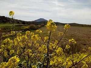 Más margaritas con la Sierra de Hornachos al fondo.jpg