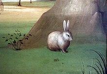 grande pene coniglio