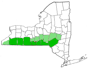 Southern Tier - Image: Map of New York highlighting Southern Tier
