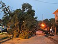 Maple Street Treefall New Orleans 22Jul2014 1.jpg