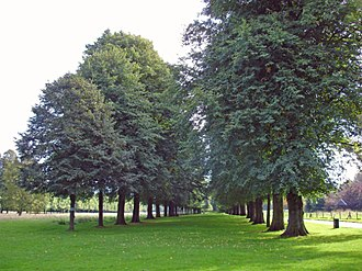 Marbury Hall, Anderton with Marbury - Lime Avenue