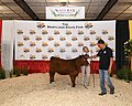 Maryland State Fair - 48624523533.jpg