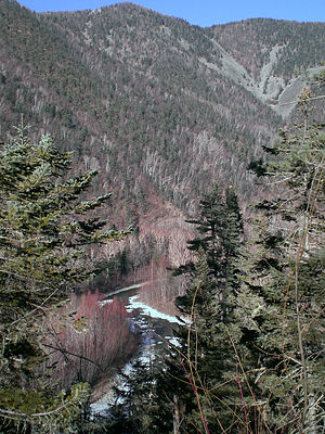 Temperate rainforests of the Russian Far East - Maximovka valley