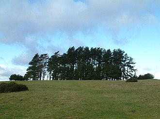 "Edward Thomas (poet) - Clump of Scots pine trees on May Hill – Robert Frost and Thomas walked here and it was here that Thomas began writing his poem ""Words""."