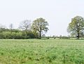 Meadowland west of Edenbridge - geograph.org.uk - 788211.jpg