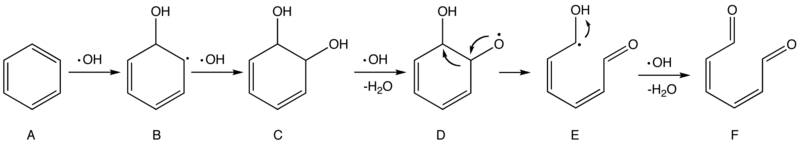 Proposed mechanism of the oxidation of benzene by hydroxyl radicals