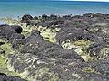 Mejillones punta Cuevas (137).JPG