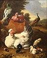 Melchior d'Hondecoeter-poule blanche.JPG