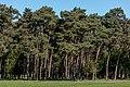 Merfeld, Wildpferdebahn, Weg am Waldrand -- 2014 -- 0454.jpg