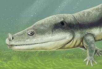 2012 in paleontology - Microposaurus averyi.