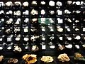 Mineral exhibition room of the National Museum of Nature and Science.jpg