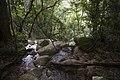 Minnamurra Rainforest - panoramio (26).jpg