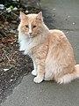 Mittens the cat of wellington.jpg
