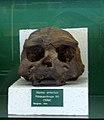 Monaco Homo erectus.jpg