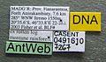 Monomorium fisheri casent0491610 label 1.jpg