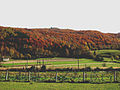 Mrzlo polje autumn.jpg