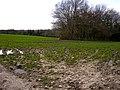 Muddy Farmland - geograph.org.uk - 362048.jpg